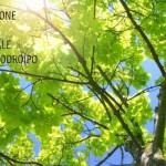 "10 APRILE: INCONTRO SU ""MUSIC LEARNING THEORY – EDWIN GORDON"""